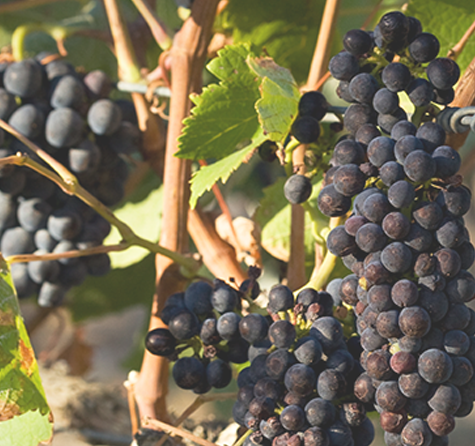 Ladbroke Grove Wines